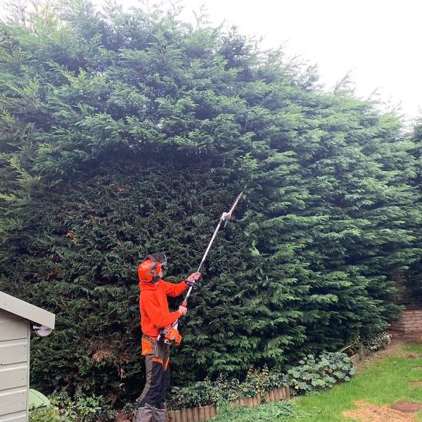 Tree Surgery Hedge Trimming