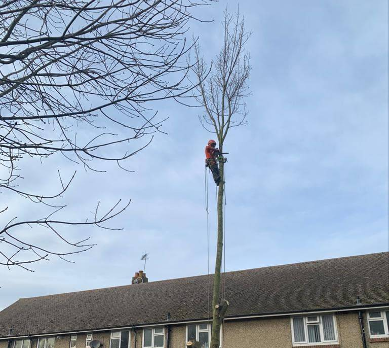 Tree Surgery Inspection and Survey