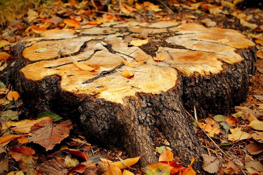 Ecoplug Stump Removal